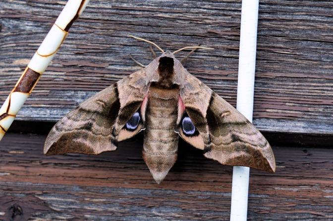 moth-2432376_1280